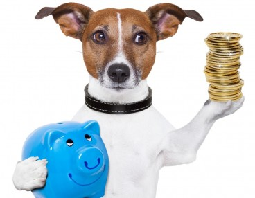 Small hairy dog clutching a blue piggy bank and a pile of pennies