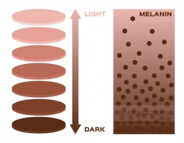Darker skin tones have much more melanin