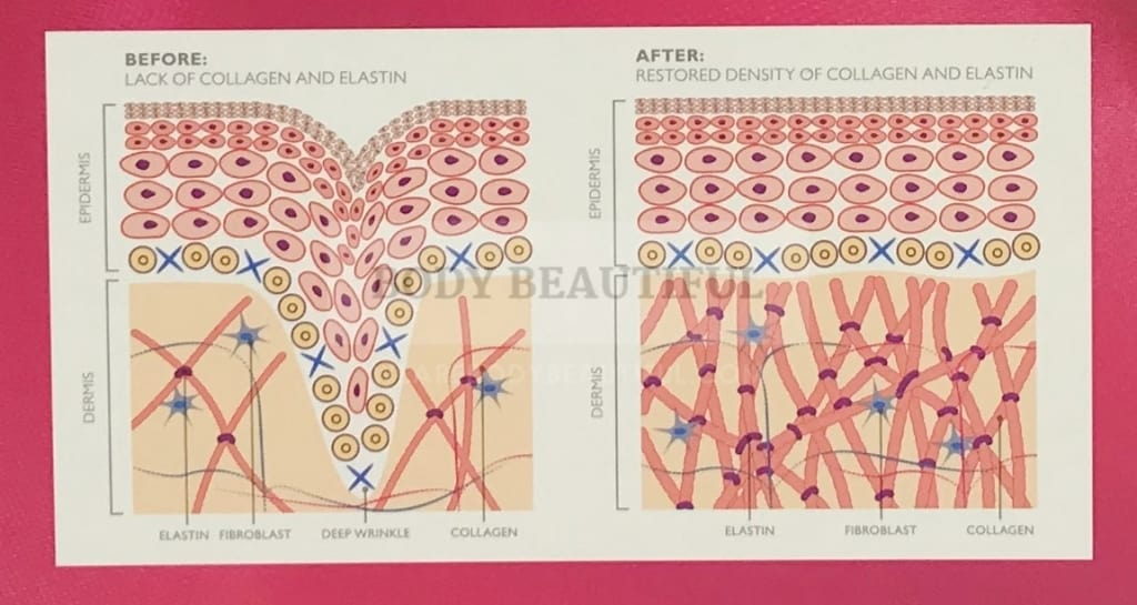Snapshot of the collagen and elastin remodelling diagram on the back of the silk'n FaceTite box